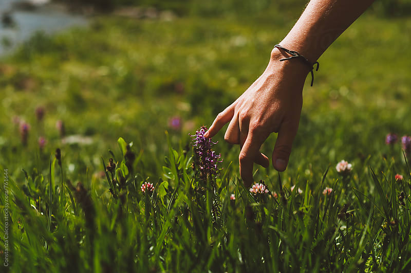 A young woman's hand touching tiny flowers in a green field during a summer afternoon by Constanza Caiceo for Stocksy United