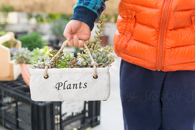 Little gardener holding pot with succulent plants by Lawren Lu for Stocksy United