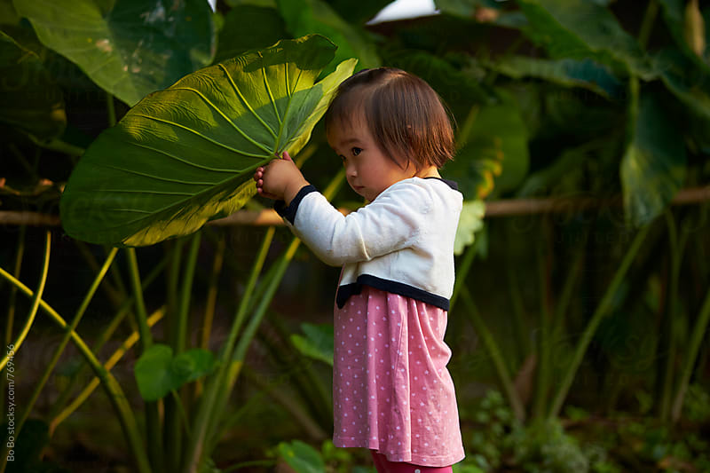 lovely little asian girl holding a big leaf outdoor by Bo Bo for Stocksy United