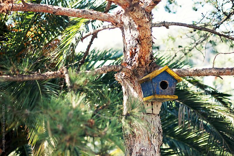 Bird house on the tree by Jovana Rikalo for Stocksy United