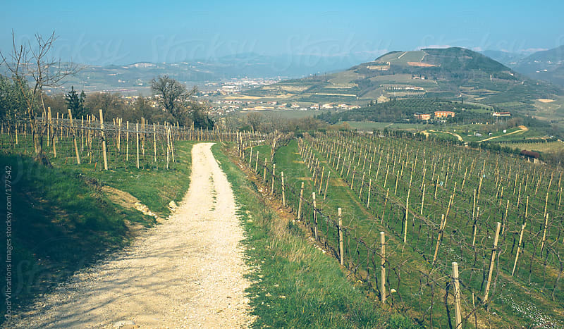 Path in the vineyards by Good Vibrations Images for Stocksy United