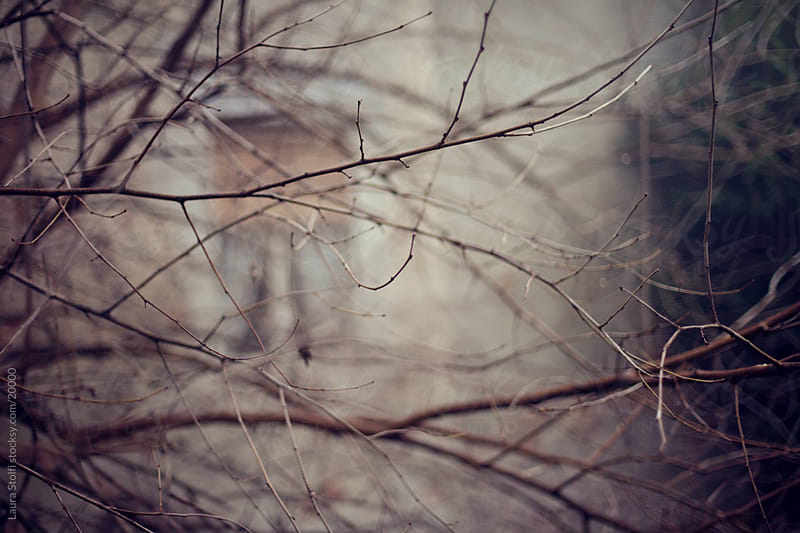 Close-up of leafless branches with abandoned house window on background in a misty morning by Laura Stolfi for Stocksy United