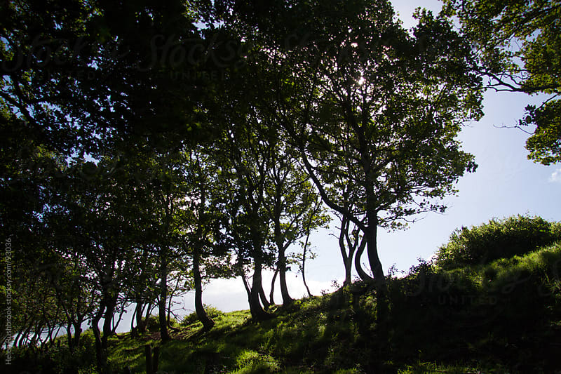 A line of trees at the top of a grassy bank. by Helen Rushbrook for Stocksy United