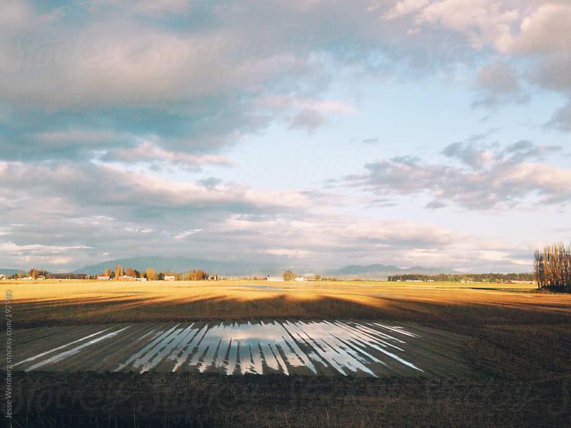 Fields by Jesse Weinberg for Stocksy United