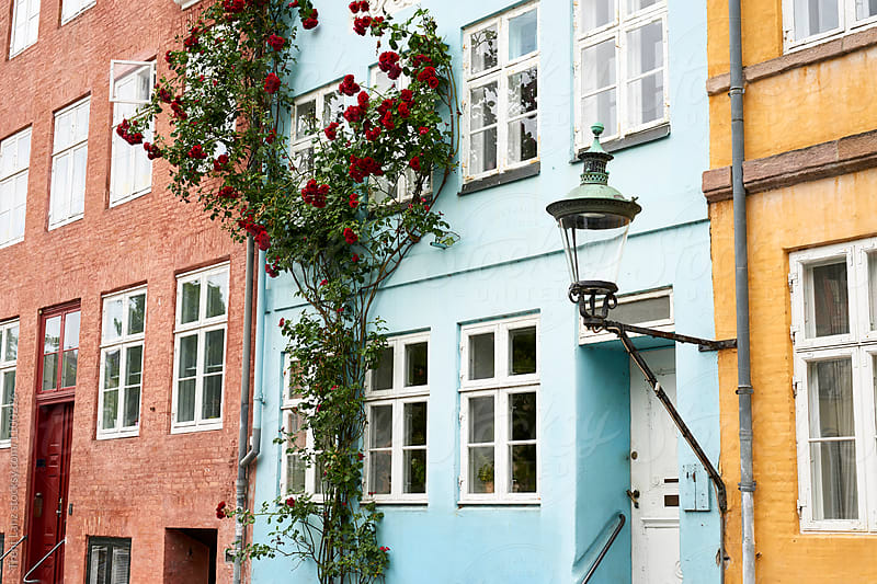 Beautiful plant with flowers growing on blue wall of building by Trent Lanz for Stocksy United