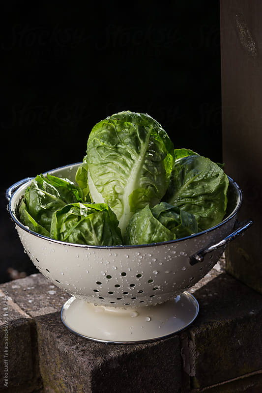 Lettuces in colander by Aniko Lueff Takacs for Stocksy United