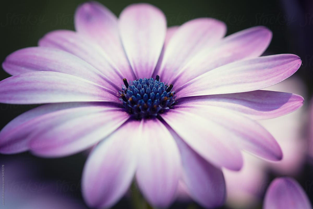 Spring Flowers In Japan Stocksy United