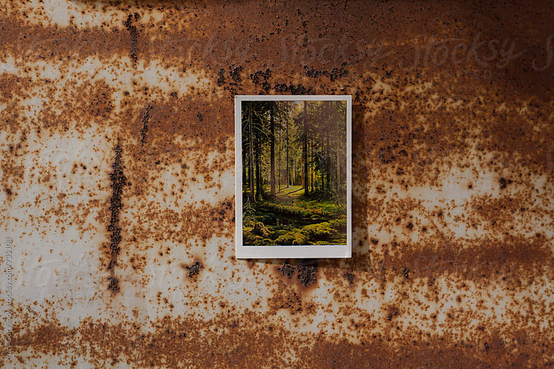 A picture of the forest on the background of rust by Yury Goryanoy for Stocksy United