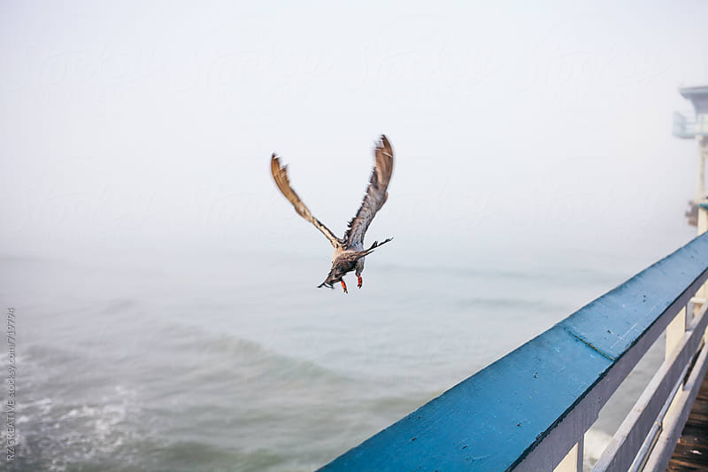 Pigeons take flight from pier on foggy morning. by Robert Zaleski for Stocksy United
