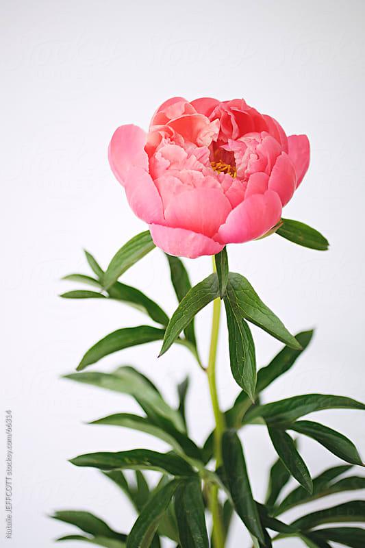 flower closeup by Natalie JEFFCOTT for Stocksy United