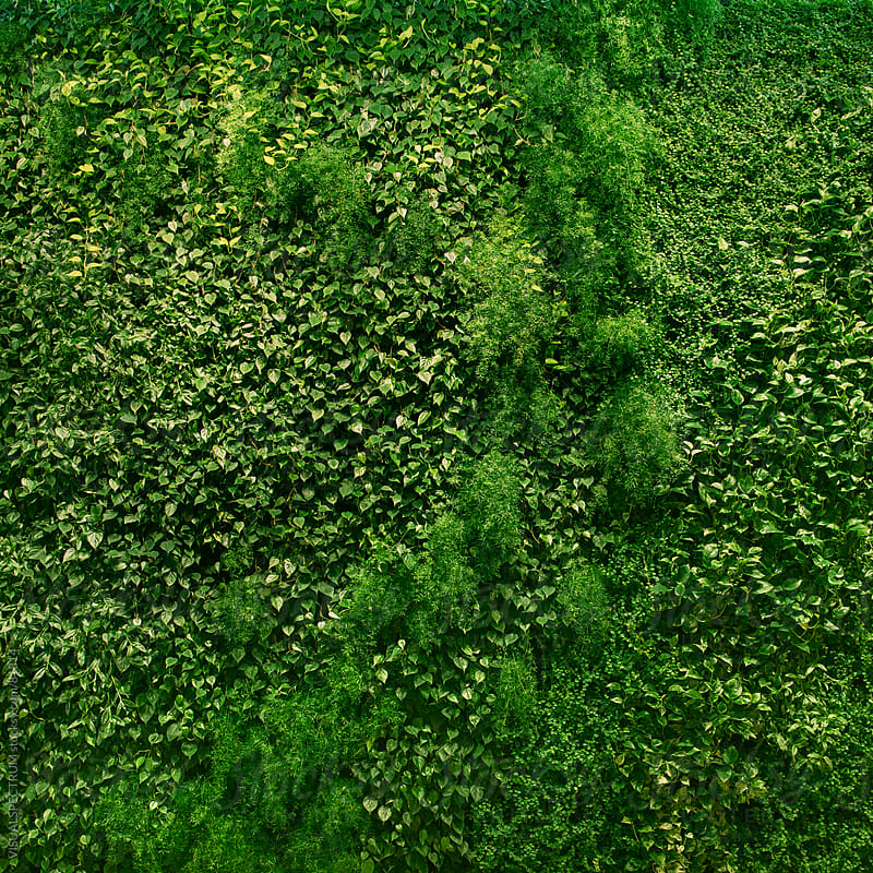 Vertical Garden by VISUALSPECTRUM for Stocksy United