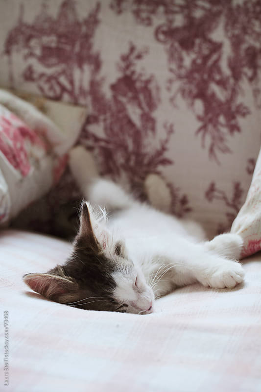 Kitten sleeping peacefully and cozily on a sofa by Laura Stolfi for Stocksy United