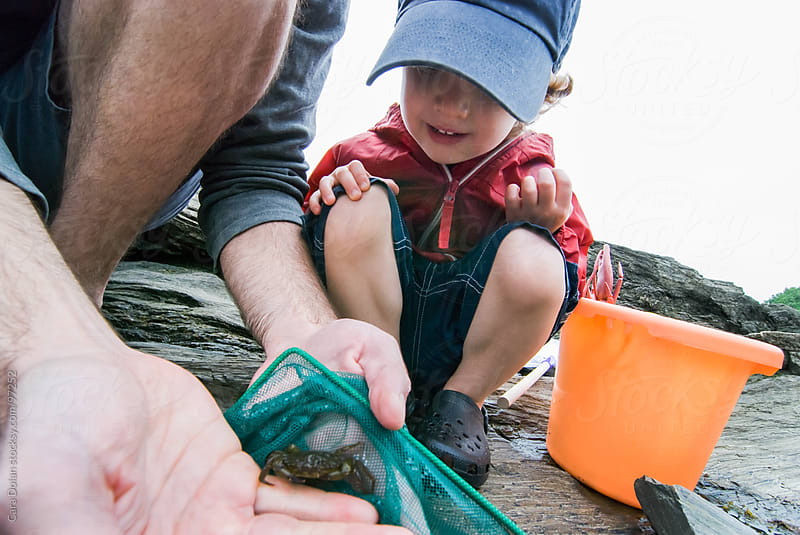 Father and son exploring tidal pools together look at a green crab they just caught by Cara Dolan for Stocksy United