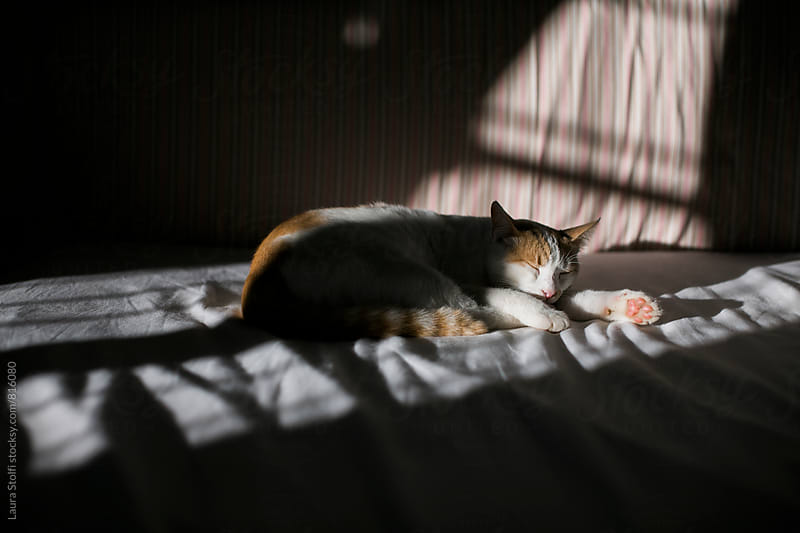 Cat sleeps happily half in shadow and half in sunray on bed by Laura Stolfi for Stocksy United
