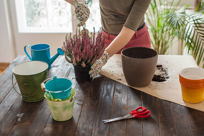 Woman Planting a Flower at Home by Mosuno for Stocksy United