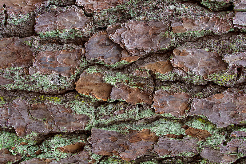 Natural background, close-up of tree bark by Adam Nixon for Stocksy United