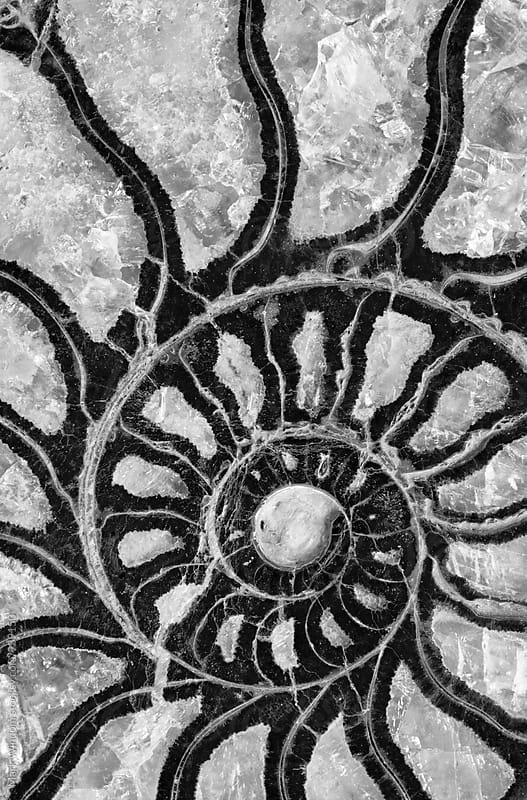Ammonite fossil in black and white by Mark Windom for Stocksy United
