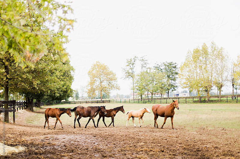 Colt and young horses walking in a row behind mare in bright outdoor by Laura Stolfi for Stocksy United