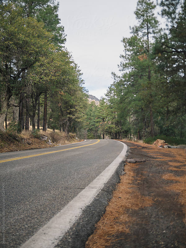 low shot of road running through pine tree forest in Arizona by Jeremy Pawlowski for Stocksy United