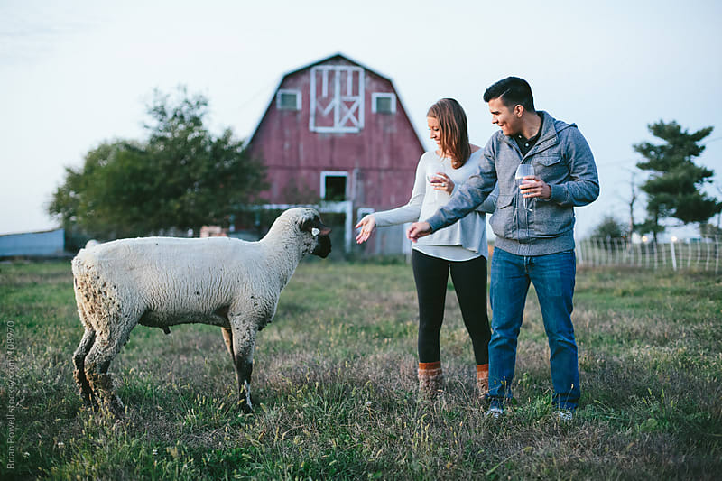 young couple greeting a curious sheep by Brian Powell for Stocksy United