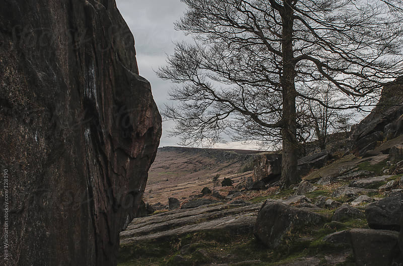 Stanage Plantations by Neil Warburton for Stocksy United