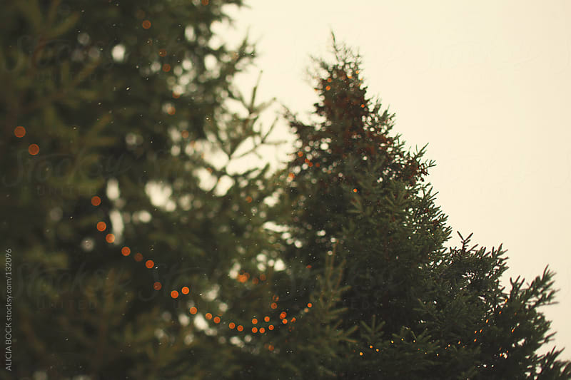 Lights On The Tree - Horizontal by ALICIA BOCK for Stocksy United