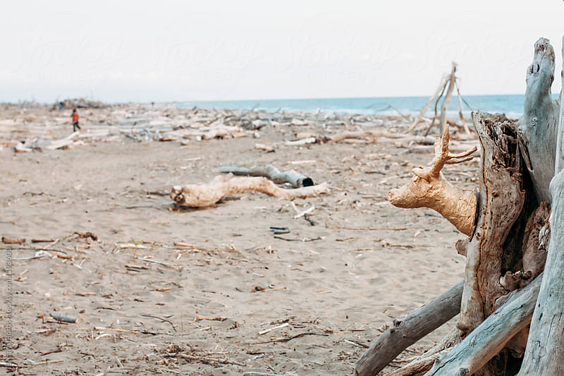 Deer head on an uncontaminated beach with full of sticks and branches before the Summer season by Beatrix Boros for Stocksy United