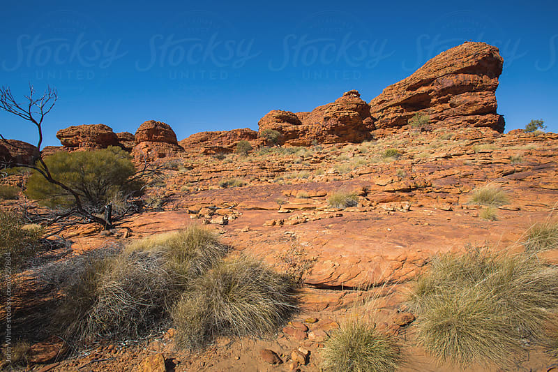 Kings Canyon central Australia. by John White for Stocksy United