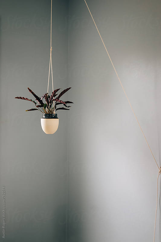 Hanging Plant in Corner of Grey Room by Austin Rogers for Stocksy United
