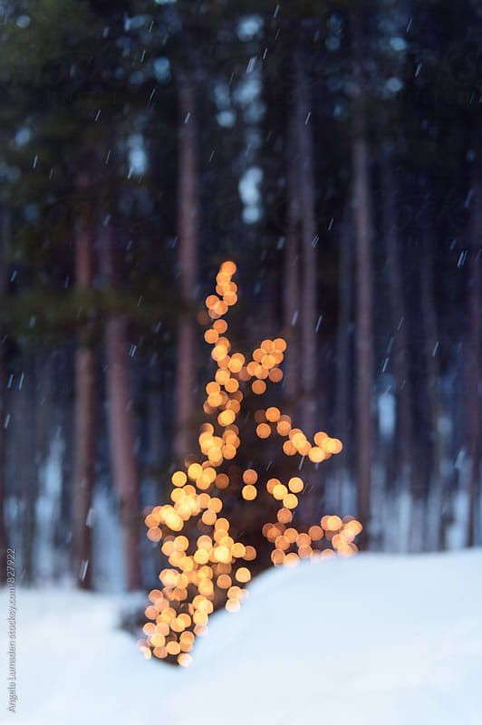 Outdoor christmas tree lit with holiday lights in the snow in the evening by Angela Lumsden for Stocksy United