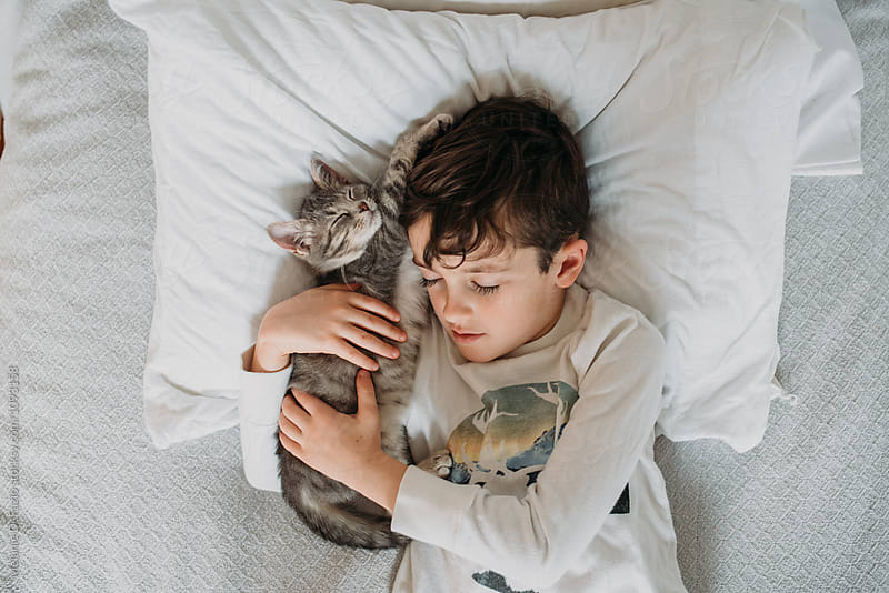 Cat nap by Melanie DeFazio for Stocksy United