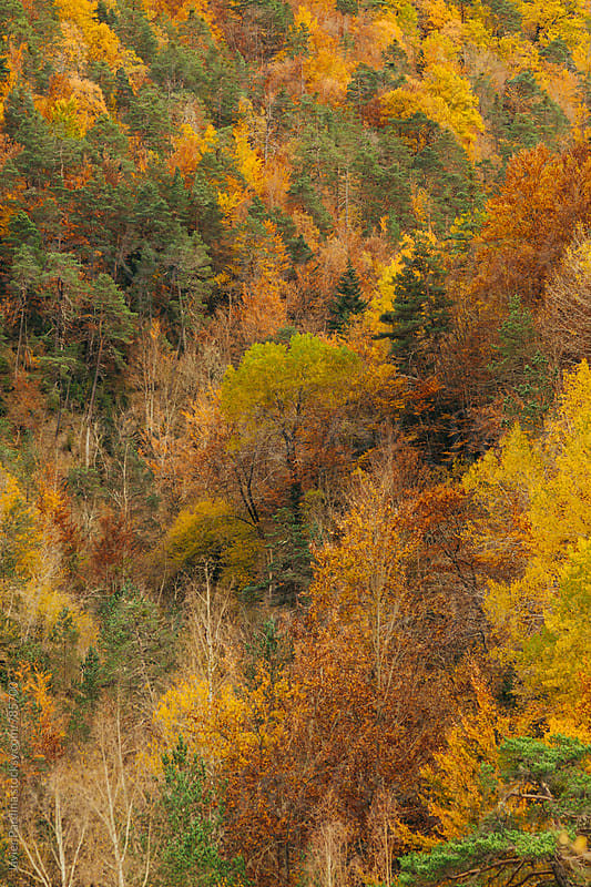 texture of autumn colorful forest by Javier Pardina for Stocksy United