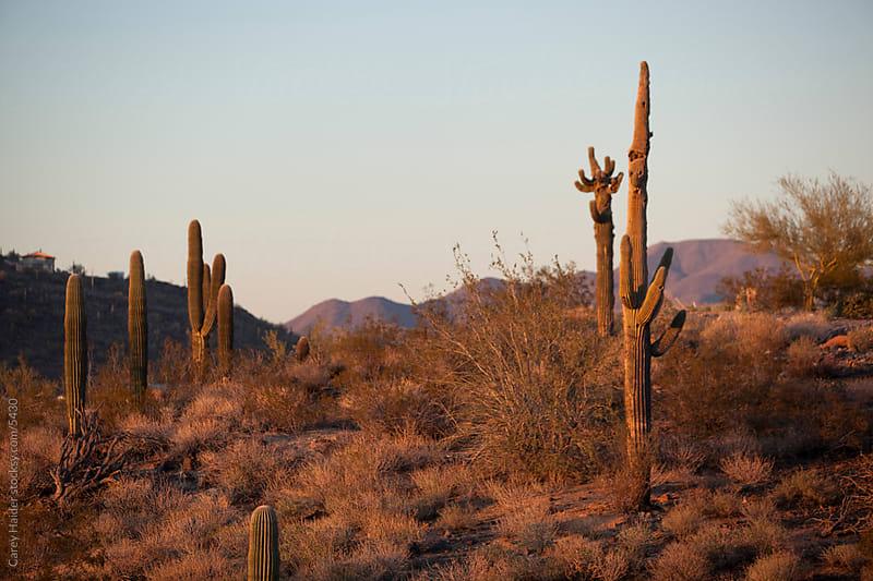 Arizona Desert by Carey Haider for Stocksy United