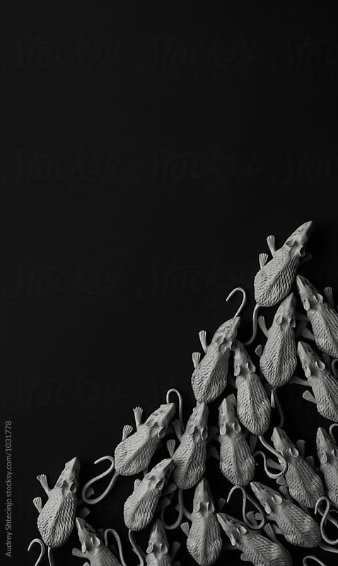 White rats/mouses on black background/toy replica by Marko Milanovic for Stocksy United