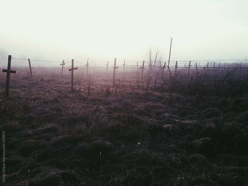 Foggy  Vacant Vineyard by Kevin Gilgan for Stocksy United