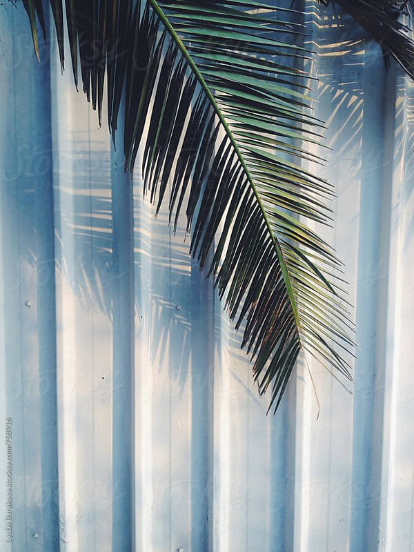 Palm leaf the light blue background in the sunset  by Lyuba Burakova for Stocksy United