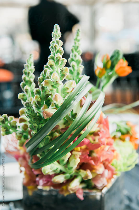 Floral Arrangements by Cameron Whitman for Stocksy United