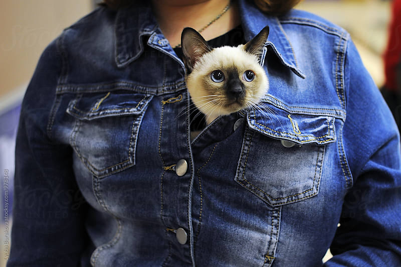 Kitten looking out under a denim jacket by Lyuba Burakova for Stocksy United