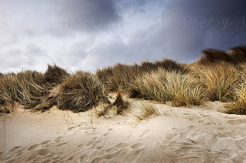 Sand dunes under winter skies by James Ross for Stocksy United