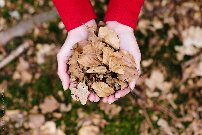Hands holding brown leaves by Gabriel Tichy for Stocksy United
