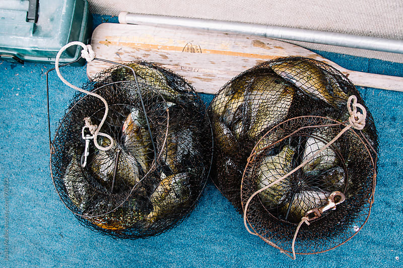 Two baskets full of fresh water fish.  by Justin Mullet for Stocksy United