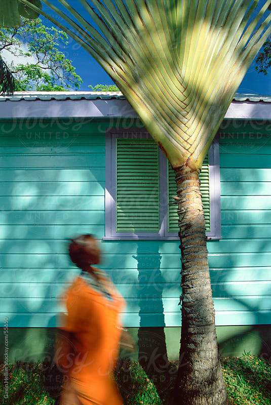 Palm frond in front of shutters on a wooden house, Barbados, West Indies, Caribbean, Central America by Gavin Hellier for Stocksy United