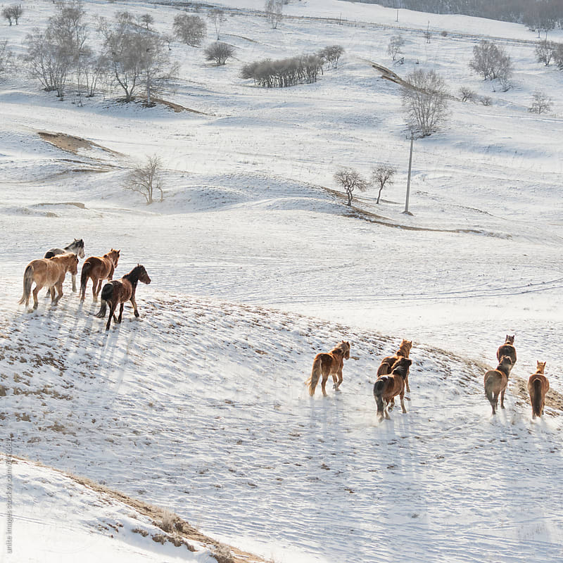 Horses on the winter meadow by unite images for Stocksy United
