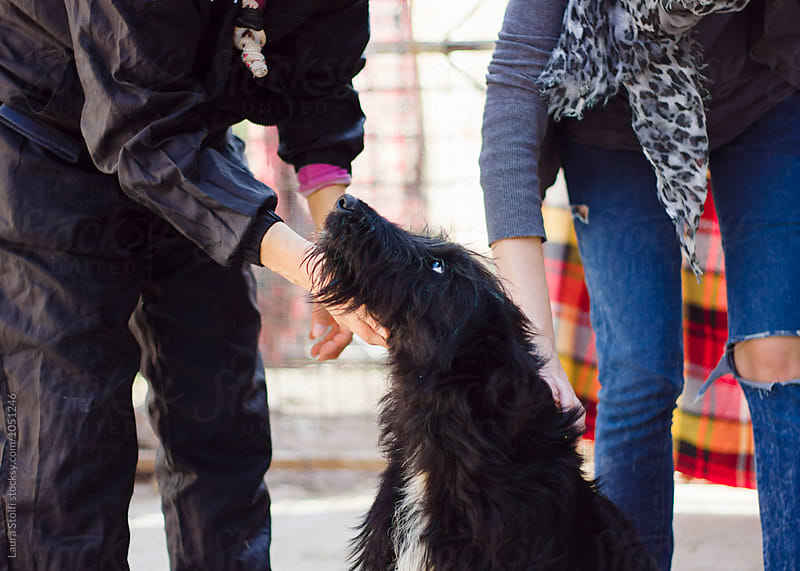 Two unrecognizable women caress giant schnauzer dog sitting amongst them by Laura Stolfi for Stocksy United