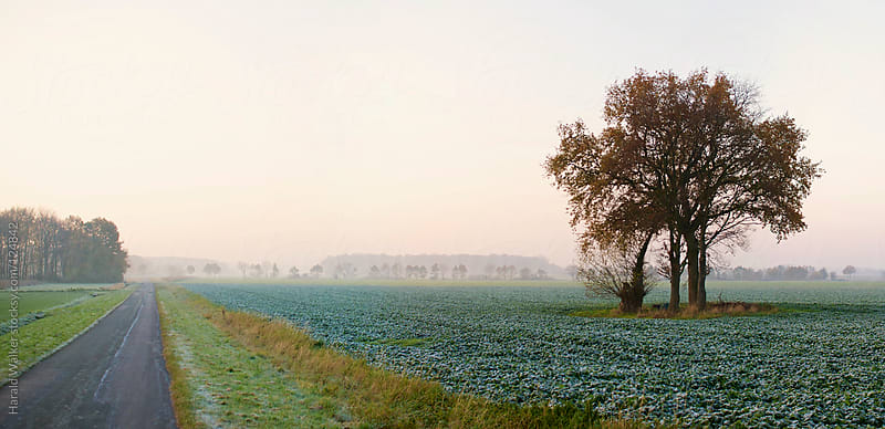 Frosted field with road and tree by Harald Walker for Stocksy United