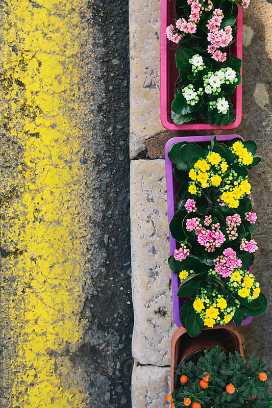 Flower boxes background by Urs Siedentop & Co for Stocksy United