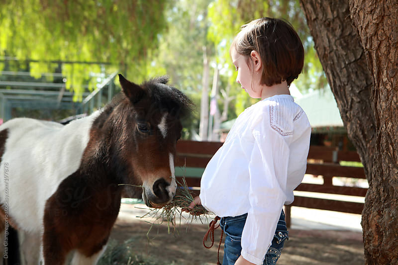 Young girl wearing white shirt and feeding hay to pony by Dina Giangregorio for Stocksy United