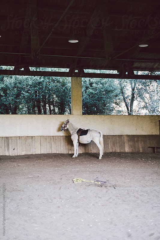 Horse by Mauro Grigollo for Stocksy United