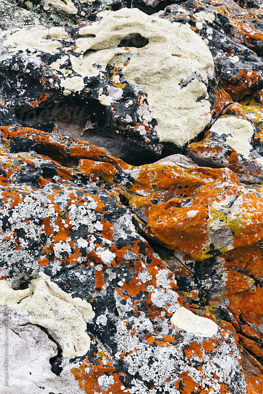 Orange and white Algae growing on rock by Jacqui Miller for Stocksy United