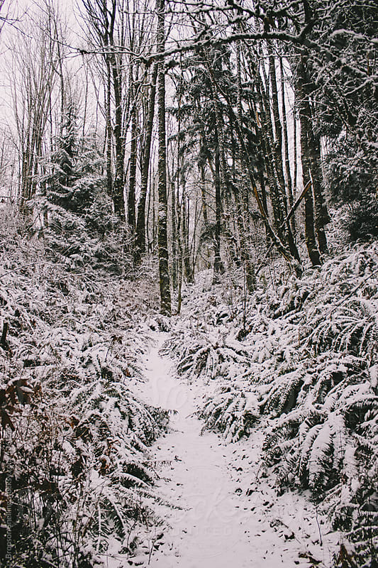 Snowy Trail by Bronson Snelling for Stocksy United
